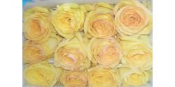 Rosa Amarilla 50cm