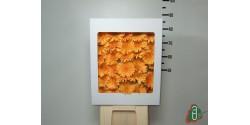 Gerberas Naranja