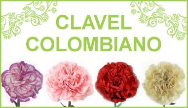 Clavel Colombiano | Flores Torrecillas, S.L.
